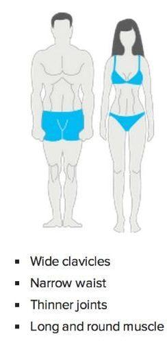 Mesomorph Body Type