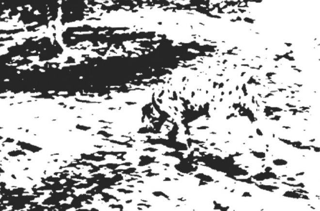 Dalmation Gestalt Image